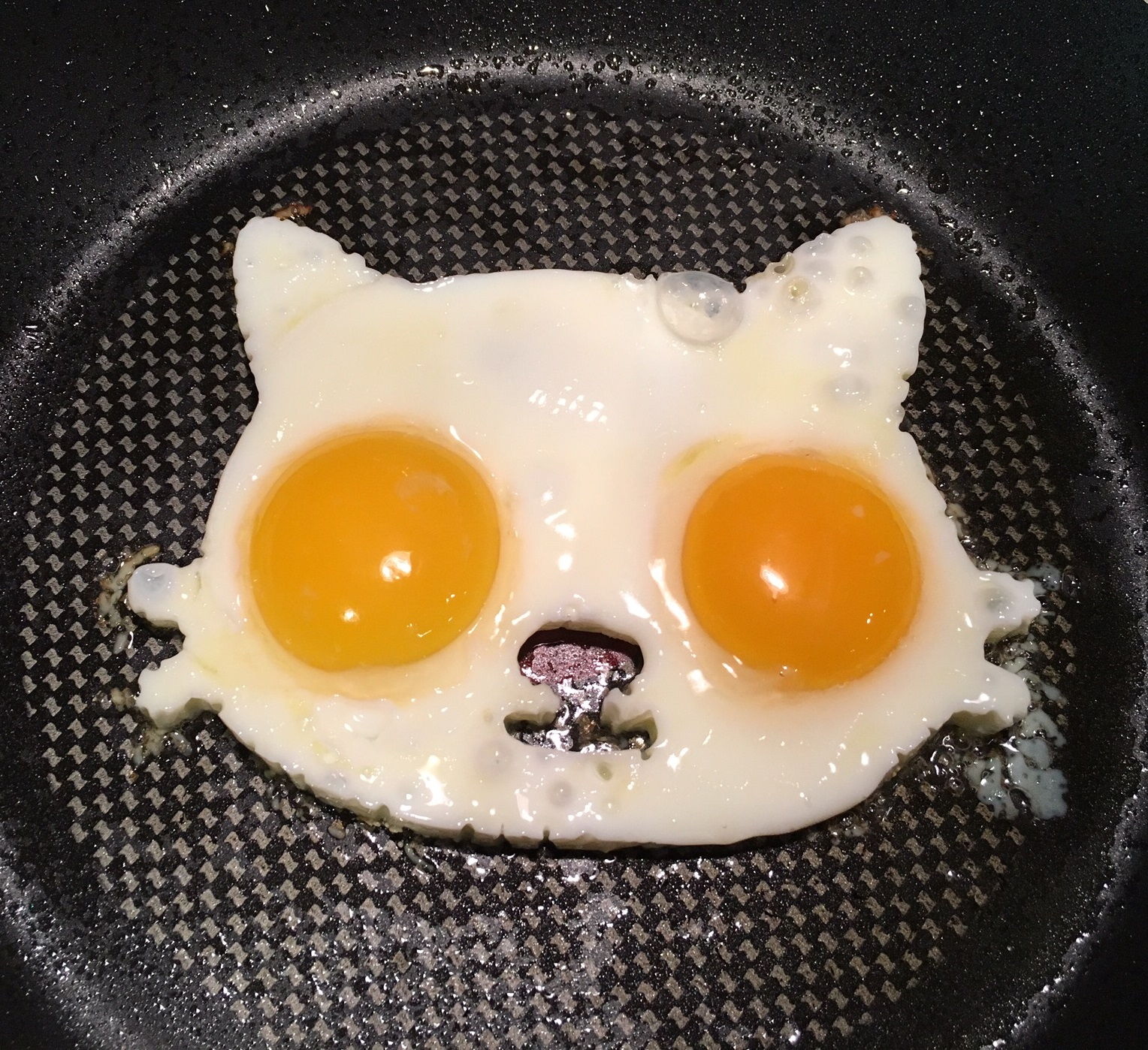 cat-eggs